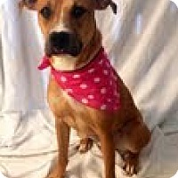 Adopt A Pet :: Misty - Justin, TX