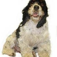 Adopt A Pet :: Piper - Inverness, FL
