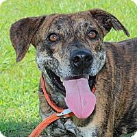 Adopt A Pet :: Emmett - Brattleboro, VT
