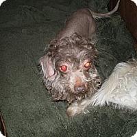 Adopt A Pet :: Levi - Apex, NC