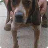 Adopt A Pet :: # 18a Maggie URGENT! - Carrollton, OH
