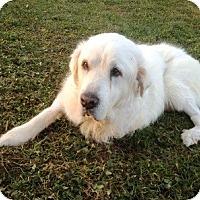 Adopt A Pet :: Jackson - North Wales, PA