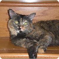 Adopt A Pet :: Lucy 2 - Scottsdale, AZ