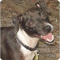 Adopt A Pet :: Loka - Jacksonville, FL