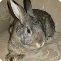 Adopt A Pet :: Jessie - Maple Shade, NJ