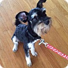 Adopt A Pet :: Emmanuel (aka Manny)