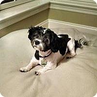 Adopt A Pet :: Posey - Mount Gretna, PA