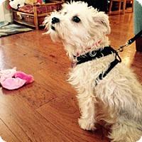 Adopt A Pet :: SAQUI - Melbourne, FL