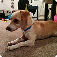 Adopt A Pet :: Sky - Edmonton, AB