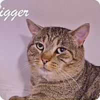 Adopt A Pet :: Tigger - Ocean City, NJ