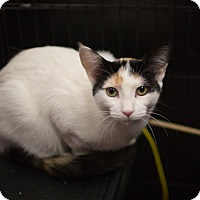 Adopt A Pet :: Abby - Toronto, ON