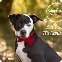 Adopt A Pet :: Sir 'Paw' McCartney - Pearland, TX
