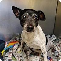 Adopt A Pet :: S/C Sugar - Miami, FL