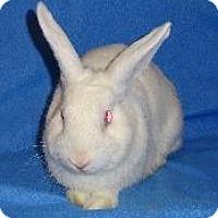 Adopt A Pet :: Nibbles - Woburn, MA