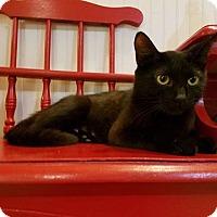 Adopt A Pet :: Joan Jett - Homewood, AL
