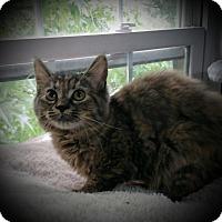 Adopt A Pet :: Delancy - Fairborn, OH