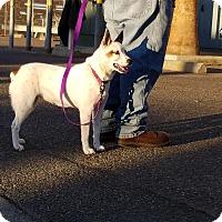 Adopt A Pet :: GIRL - Gustine, CA