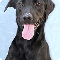 Adopt A Pet :: Cornelia Marie - Encinitas, CA