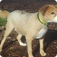 Adopt A Pet :: Pere - Yreka, CA