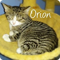 Adopt A Pet :: Orion - York, PA
