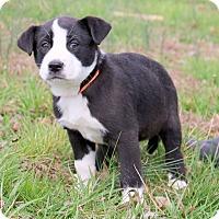 Adopt A Pet :: Marcy - Glastonbury, CT