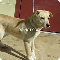 Adopt A Pet :: Belinda - Rocky Mount, NC