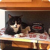 Adopt A Pet :: Kelis - New York, NY