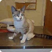 Adopt A Pet :: Dazzie - Arlington, VA