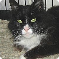 Adopt A Pet :: MIDNIGHT - 2014 - Hamilton, NJ