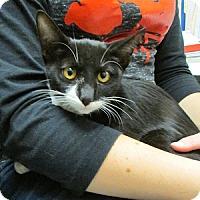 Adopt A Pet :: Pogo - Gilbert, AZ