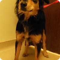Adopt A Pet :: Georgio - Gary, IN