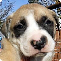 Adopt A Pet :: Baby Bethany - Oakley, CA