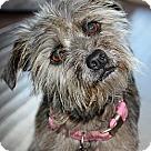 Adopt A Pet :: Mira