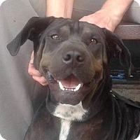 Adopt A Pet :: Miracle - Miami, FL