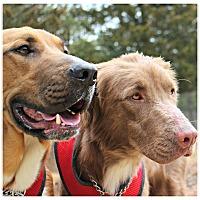 Adopt A Pet :: Bear & Peanut - Forked River, NJ