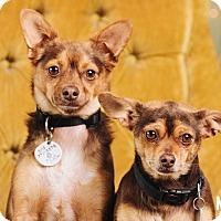 Adopt A Pet :: Egor & BooBoo - Portland, OR