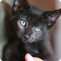 Adopt A Pet :: Elvis - Canoga Park, CA
