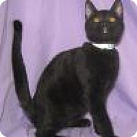 Adopt A Pet :: Luthor - Powell, OH