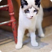 Adopt A Pet :: Olaf - Markham, ON