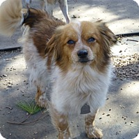 Adopt A Pet :: Isaac - Wyanet, IL