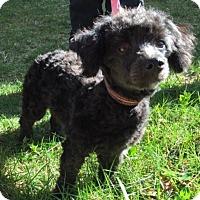 Adopt A Pet :: Musette - Santa Clarita, CA
