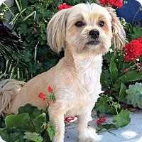 Adopt A Pet :: Opal - San Diego, CA