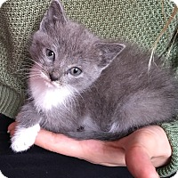 Adopt A Pet :: Cloudy - River Edge, NJ