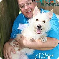 Adopt A Pet :: Hobo - Lakeland, FL
