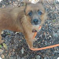 Adopt A Pet :: Stella - Lebanon, CT