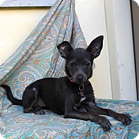 Adopt A Pet :: Polly Pocket - Blue!!! - Los Angeles, CA