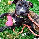 Adopt A Pet :: Winifred Sanderson