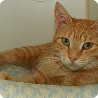 Adopt A Pet :: Somerset - Lowell, MA