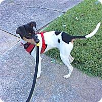 Adopt A Pet :: Dallas (NC) - Raleigh, NC