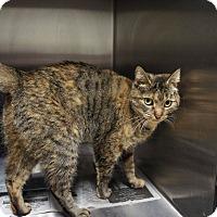 Adopt A Pet :: Soni - Henderson, NC